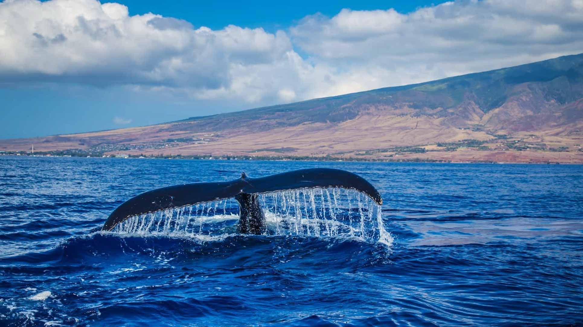 Whale Watching Season at Its Best in Cabo